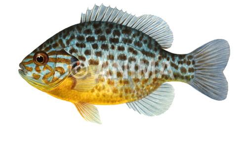 ontario fish species filetype pdf