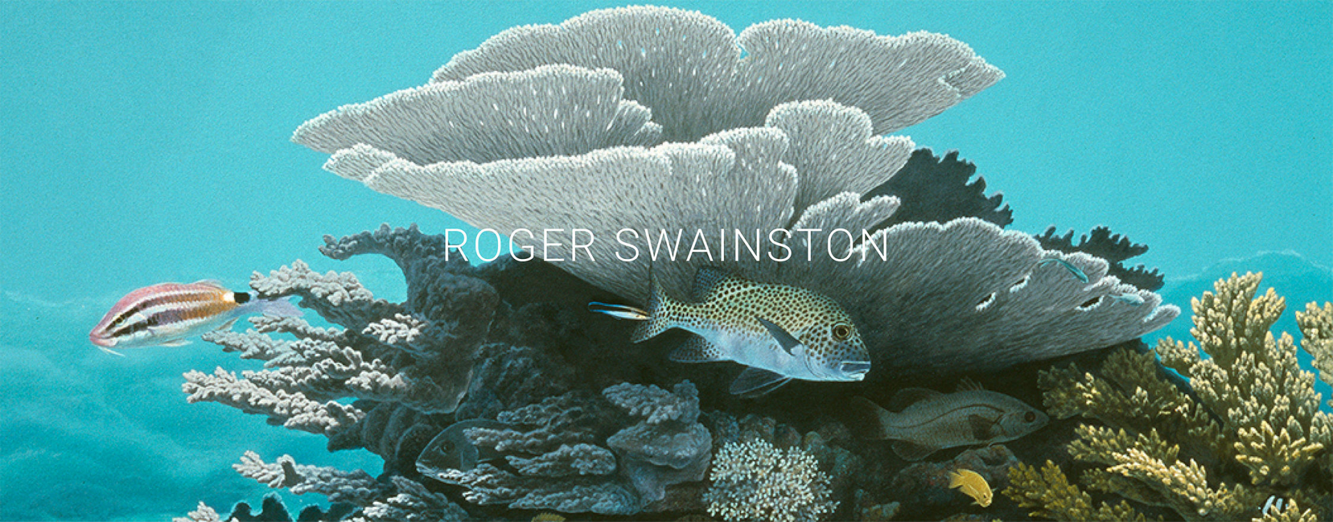 Anima Roger Swainston MINI PRO