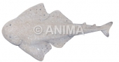Australian Angel Shark Squatina australis
